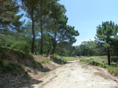 Pinares de Piedralaves;excursiones sierra madrid foro senderismo charca verde pedriza